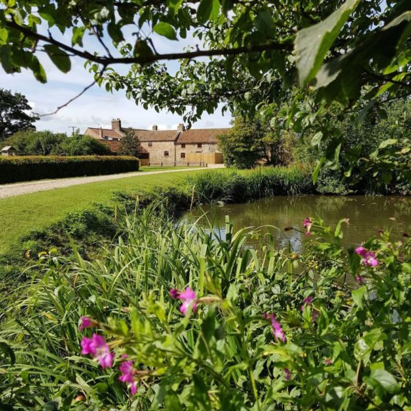 North Kingsfield Holiday Cottages farm pond