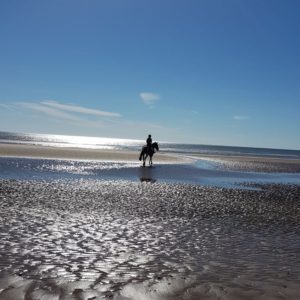 North Kingsfield Holiday Cottages horse riding on the beach