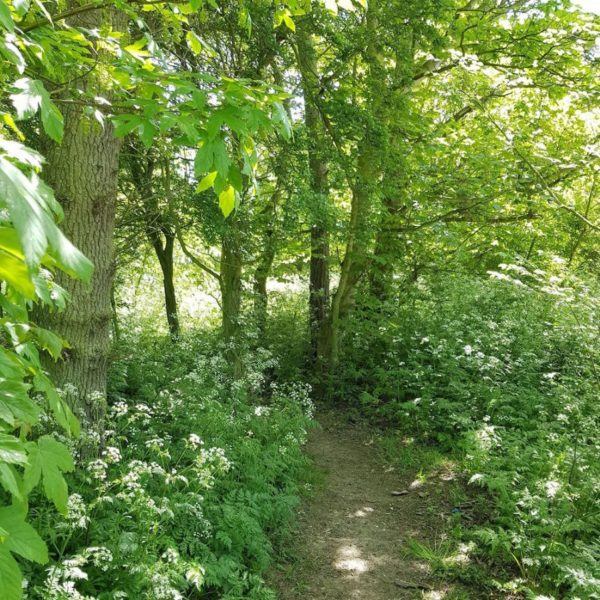North Kingsfield Holday Cottages woodland path